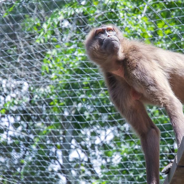 zoo nets, animal enclosure nets